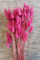 DMUSZEK JAJOWATY KOLOR CIEMNORÓŻOWY ~55 szt. (Lagurus ovatus) ozdobna trawa suszona barwiona