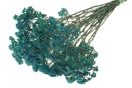 KRWAWNIK POSPOLTY KOLOR NIEBIESKI (Achillea) barwiony susz roślinny do dekoracji