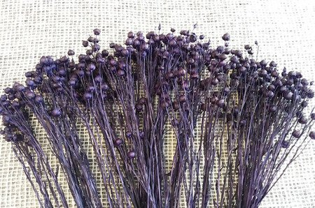LEN KOLOR CIEMNOFIOLETOWY suszony barwiony dodatek florystyczny pęczek 45-50 cm