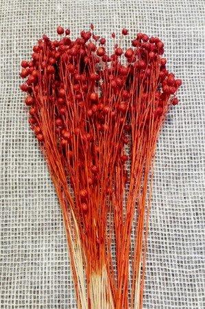 LEN KOLOR CZERWONY XL 100 g suszony barwiony dodatek do stroików i bukietów