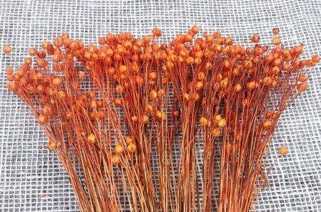 LEN KOLOR JASNOPOMARAŃCZOWY suszony barwiony pęczek 45-50 cm