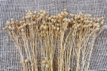 LEN WYBIELANY suszony dodatek florystyczny jasny kolor pęczek 40-50 cm