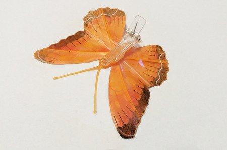 Motyl dekoracyjny na zapince kolor pomarańczowy z czarnym obrzeżem