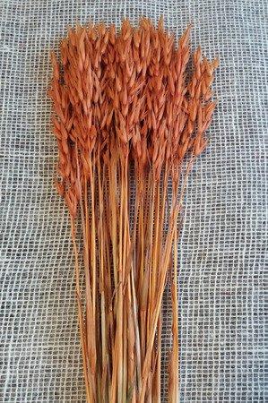 OWIES KOLOR POMARAŃCZOWY zboże suszone kłosy zbóż