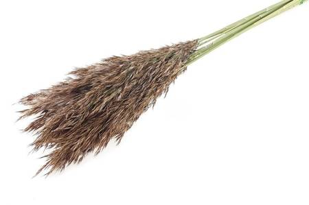 TRZCINA KOLOR NATURALNY na suche bukiety zamiennik trawy pampasowej