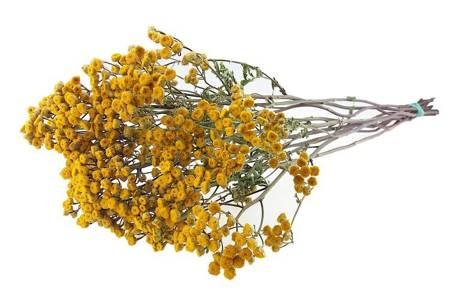 WROTYCZ KOLOR ŻÓŁTY (Tanacethum vulgare) naturalne niebarwione kwiaty suszone do dekoracji